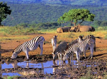 саванна в ЮАР