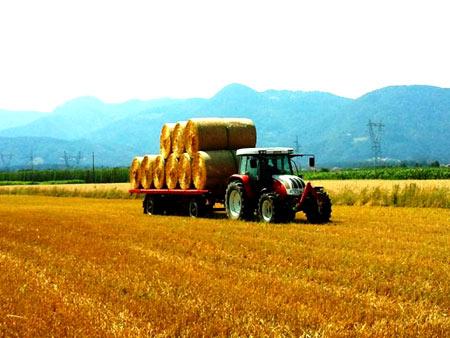 Сельское хозяйство в Словении