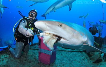 акулы на сейшелах