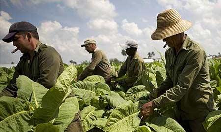 работа на Кубе