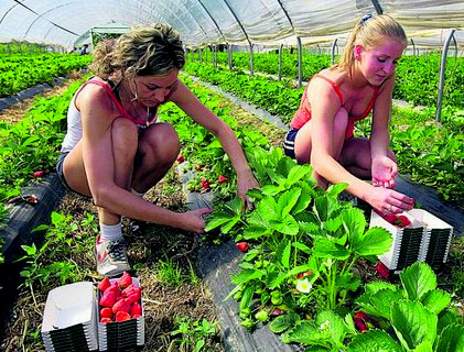ферма в Финляндии