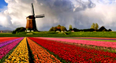 Уровень жизни и цены в Голландии