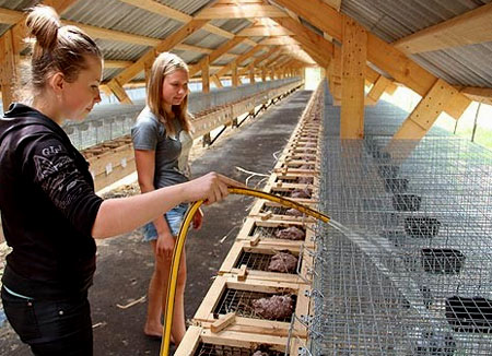 уход за животными на ферме