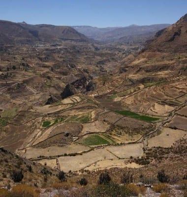Сельское хозяйство в Перу