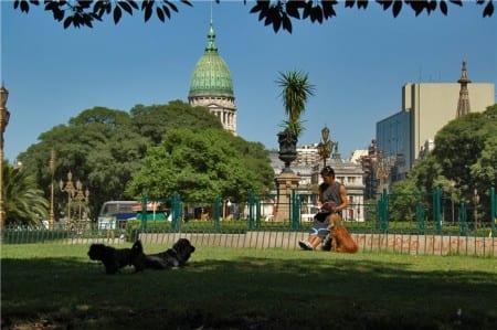 Собаки в Уругвае