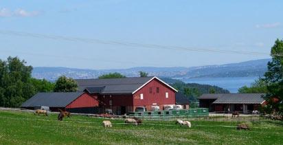 ферма в Норвегии