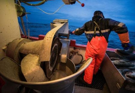 работа на рыболовном траулере