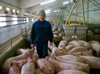 Работа на ферме в Дании