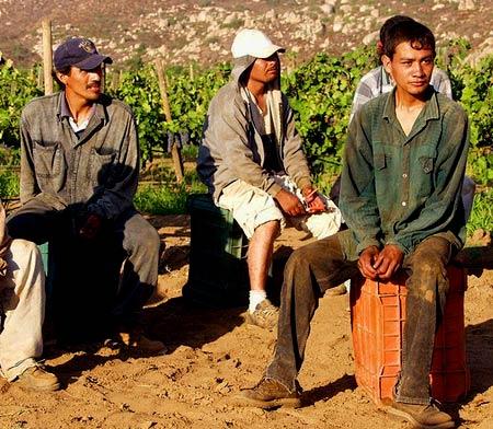 нелегальные рабочие в США