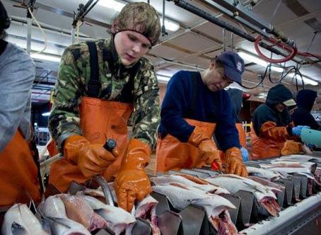 аляска рыбная фабрика