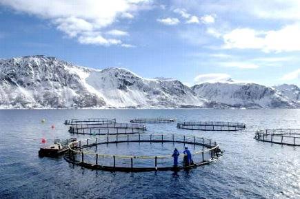разведение рыбы в Норвегии