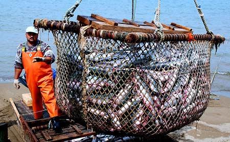 рыбное хозяйство в Норвегии