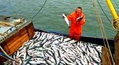 Работа в Норвегии на рыбных заводах