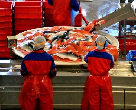 Рыбный завод в Норвегии