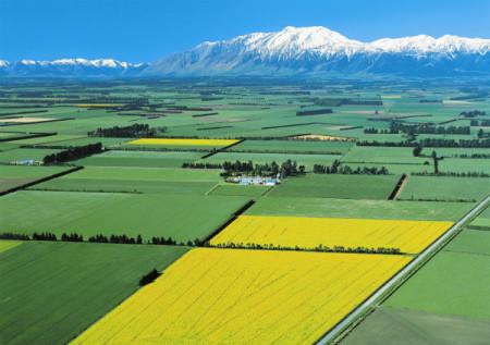 Поля Новой Зеландии