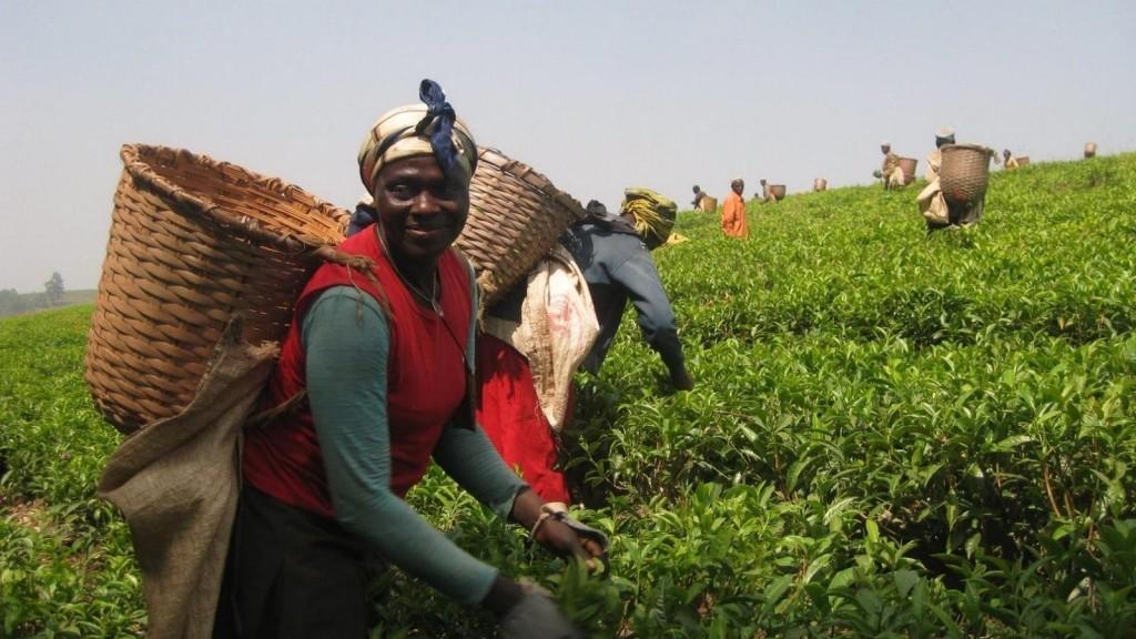 Плантации Камеруна