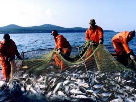 Рыбные промыслы