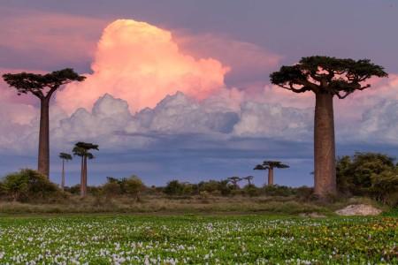 Виды Мадагаскара