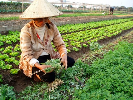 Работа во Вьетнаме