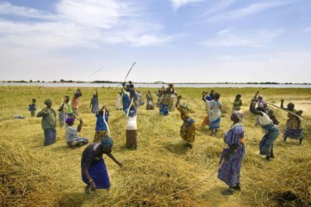 Сельское хозяйство в Африке