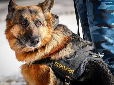 Служебная собака на границе