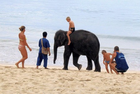 Ребёнок на слоне