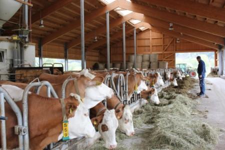 Производство молока в Германии