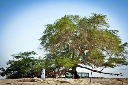 Древо Жизни(Шаджарат-аль-Хайят)