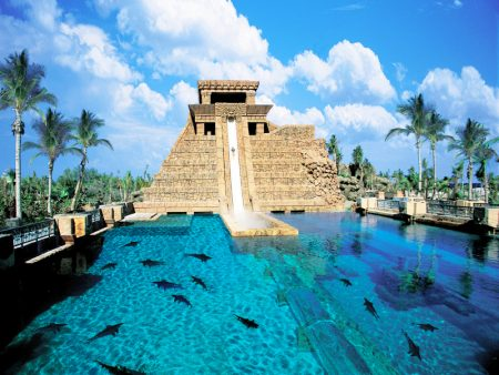Тропический аквариум, Джибути