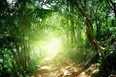 Джунгли в Доминиканской республике