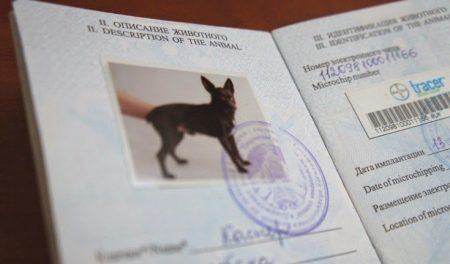 Ветеринарный паспорт питомца