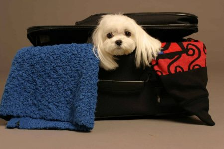 багаж и собака
