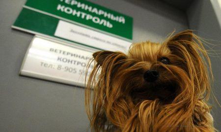 ветеринарный контроль в аэропорту