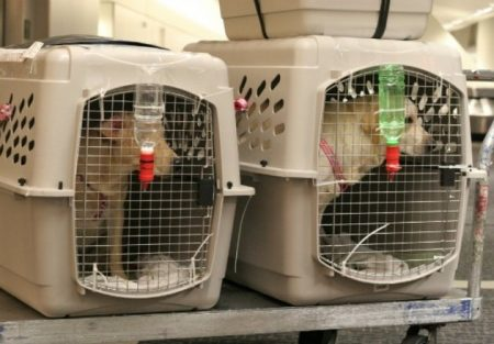 Перевозка собак за границу