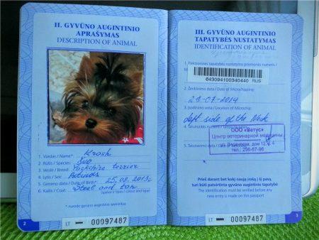 Пример оформления международного ветеринарного паспорта