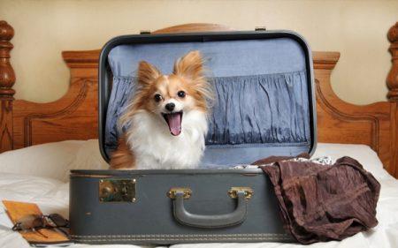Ввоз собаки за границу