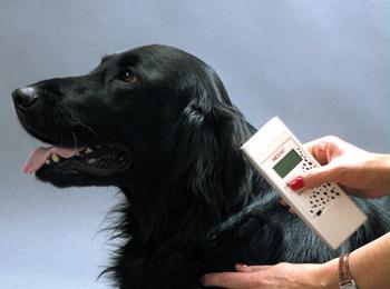 С 2018 года в РФ будет создана единая система идентификации домашних и сельскохозяйственных животных