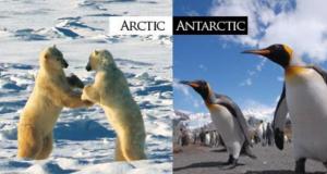 Арктика, Антарктика и Антарктида