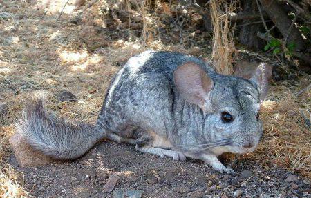 Животные Аргентины, которые там живут и обитают: фото и названия