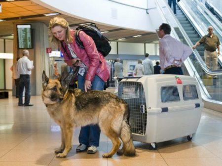 Собаки бойцовских пород рискуют остаться на границе