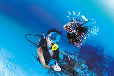 Неожиданная встреча под водой
