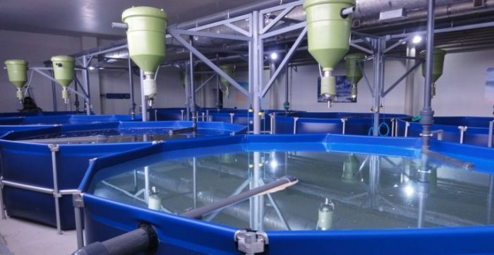 УЗВ для выращивания рыбы