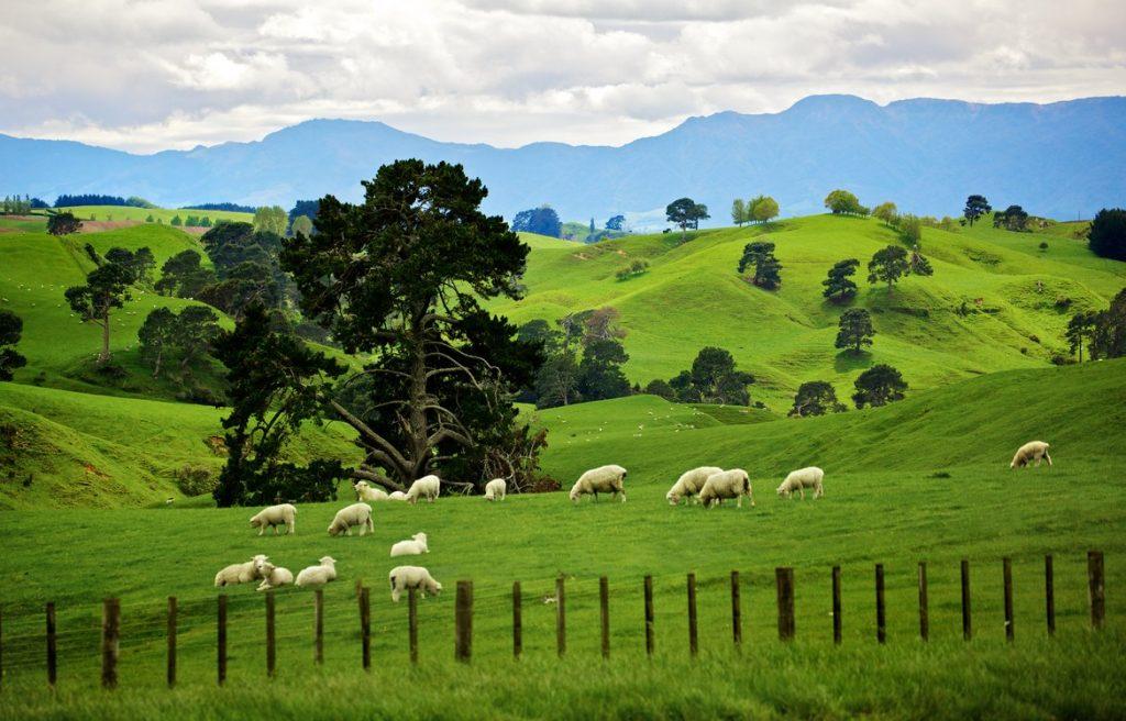 Новая Зеландия: краткая характеристика и описание страны, материалы о жизни в ней