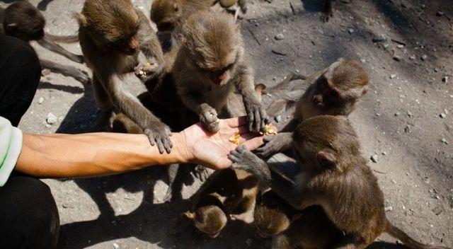 Остров обезьян Хон-Лао в Нячанге, Вьетнам. Кормление обезьян