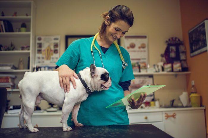 Зарплата ветеринара в США