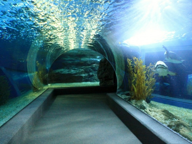 Океанариум Подводный мир (Underwater World Pattaya). Паттайе, Тайланд