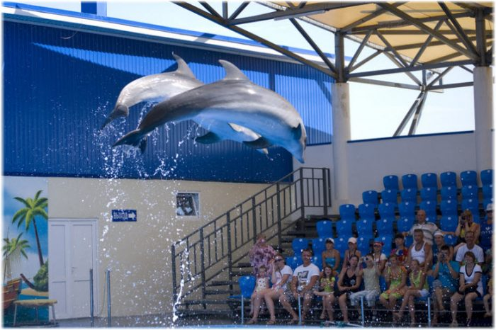 Дельфинарий Немо в станице Голубицкой