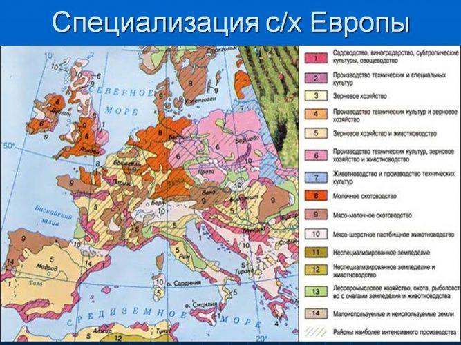 Специализация сельского хозяйства Европы