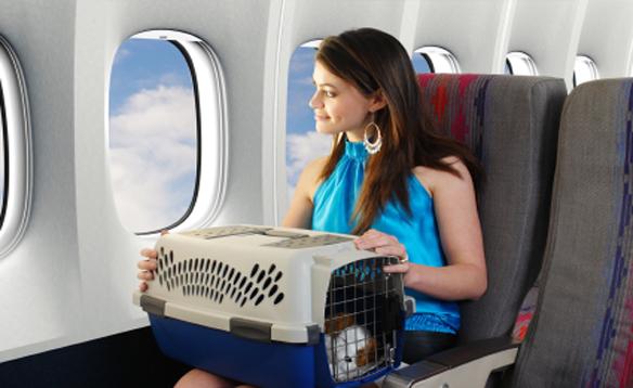 Перевозка домашних животных в самолете