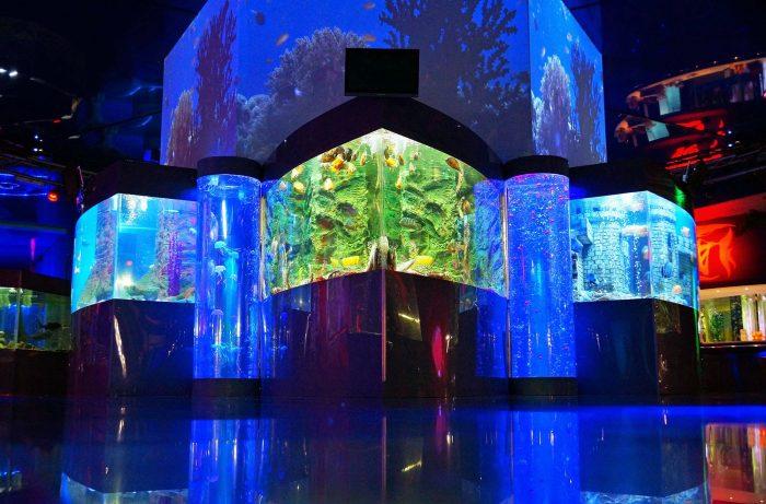 Геленджикский океанариум